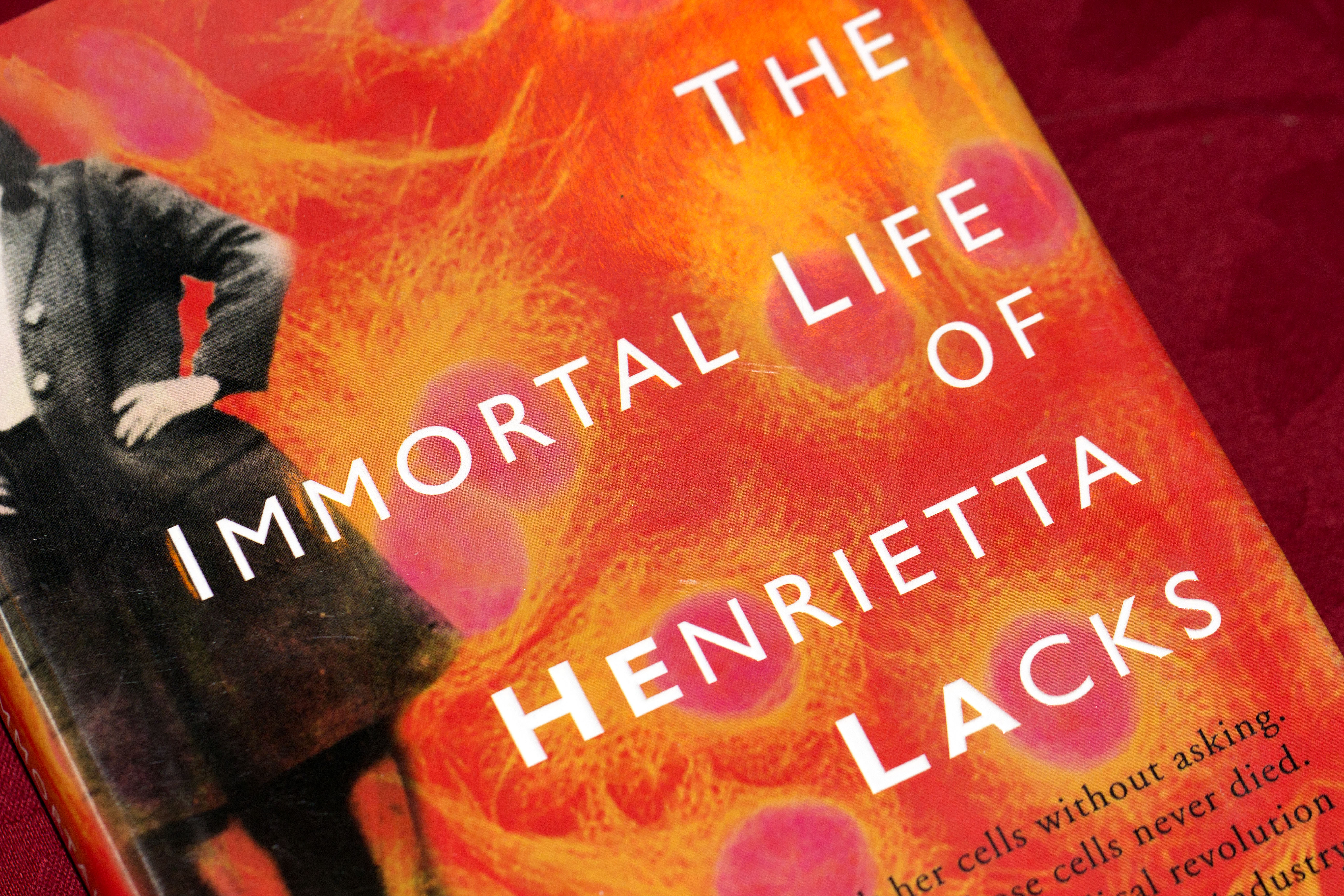 the theme of racism as portrayed in the immortal life of henrietta lacks by rebecca skloot The immortal life of henrietta lacks by rebecca skloot the immortal life of henrietta lacks what we're reading at literary corner cafe.